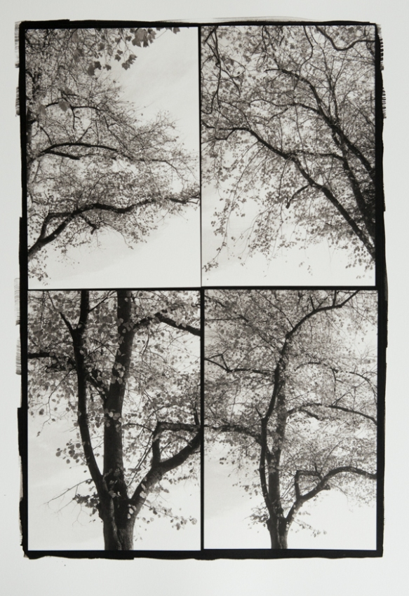 Tree Study 1. A 4 Part Platinum/Palladium Print.