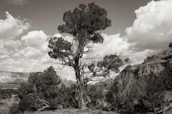 Bristlecone Pine in the Kodachrome Basin